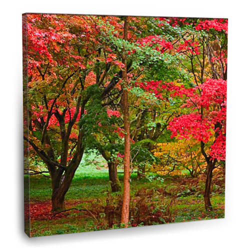 Fotografyabaskı Sonbaharda Orman Tablosu 70 Cm X 70 Cm Kanvas Tablo Baskı