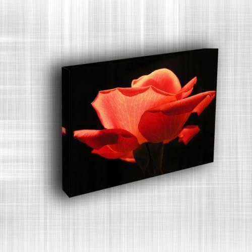Doku Canvas Baskı Çiçek- CIGE043