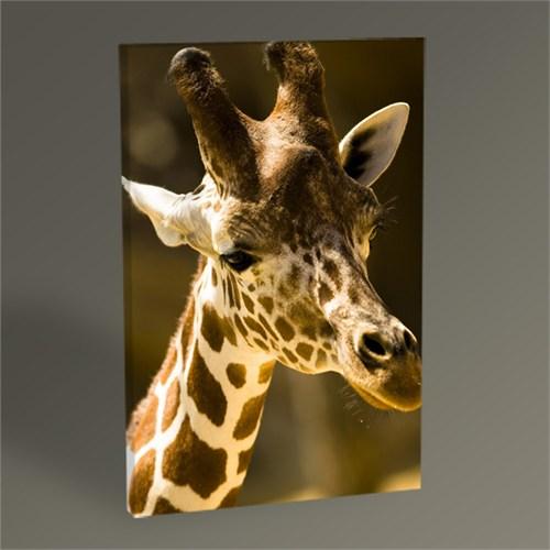 Tablo 360 Zürafa Tablo 45X30