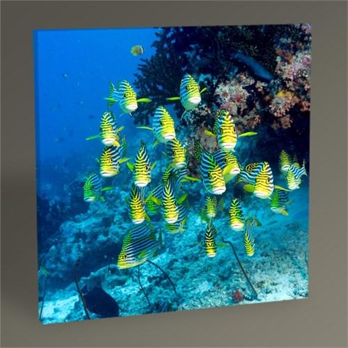Tablo 360 Balıklar Tablo 30X30