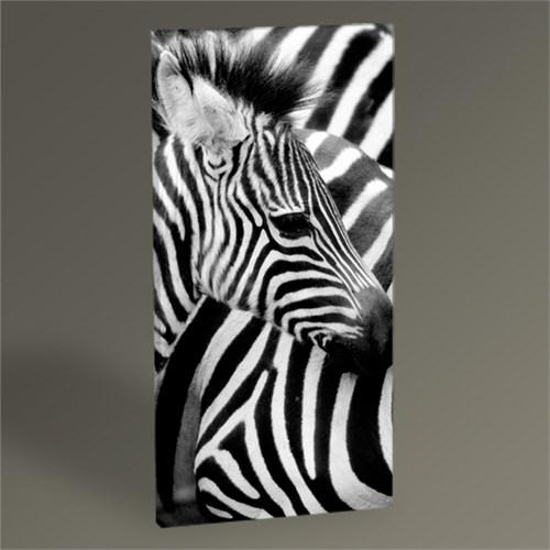 Tablo 360 Zebra Tablo 60X30