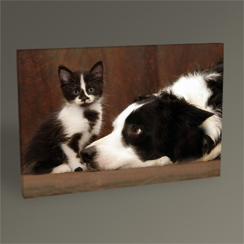 Tablo 360 Cat And Dog 45X30