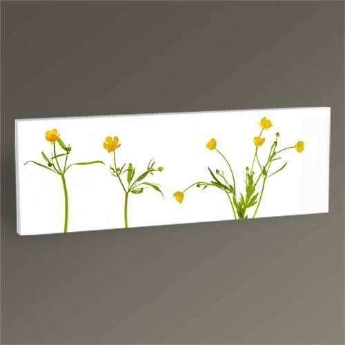 Tablo 360 Yellow Buttercup Flowers Tablo 60X20