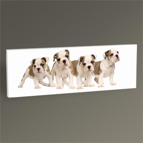 Tablo 360 Köpek Yavruları Tablo 60X20