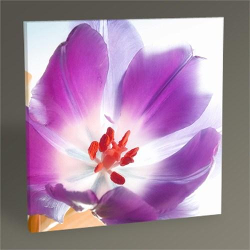 Tablo 360 Bahar Çiçeği Tablo 30X30