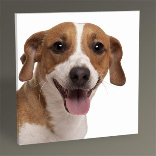 Tablo 360 Jack Russell Terrier Tablo 30X30