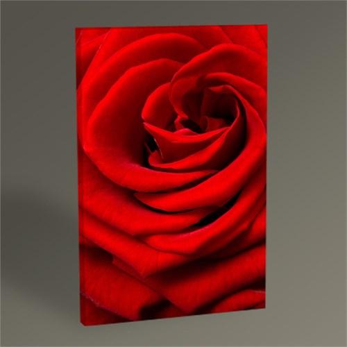 Tablo 360 Kırmızı Gül Tablo 45X30