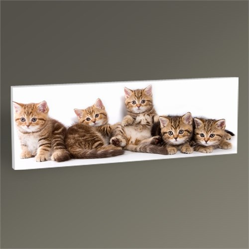 Tablo 360 Kedi Yavruları Tablo 60X20