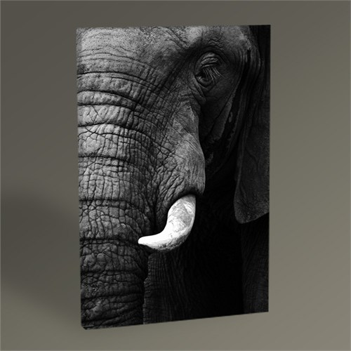 Tablo 360 Elephant Tablo 45X30