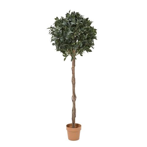 Yargıcı Yapay Defne Ağacı ( 180 X 32 X 29 Cm)