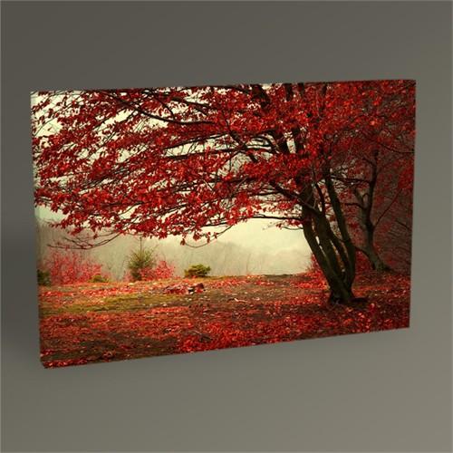 Tablo 360 Kızıl Orman Tablo 45X30