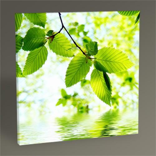 Tablo 360 Yeşil Yapraklar Tablo 30X30