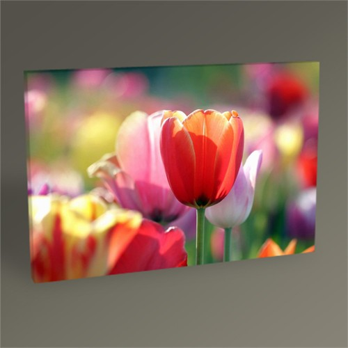 Tablo 360 Colorful Tulips Tablo 45X30