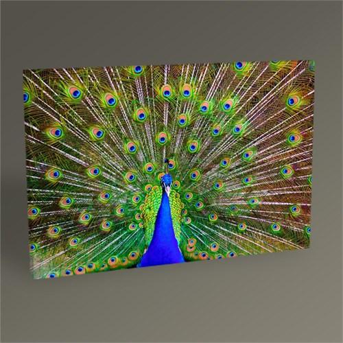 Tablo 360 Tavus Kuşu 45X30
