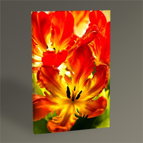 Tablo 360 Parrot Tulips Tablo 45X30