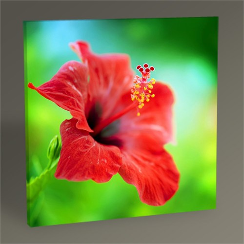 Tablo 360 Hibiscus Flower Tablo 30X30