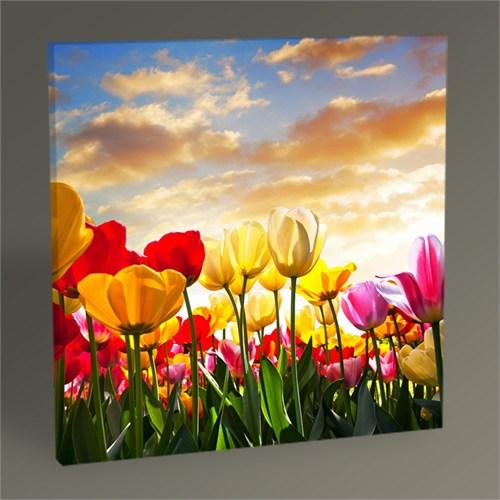 Tablo 360 Renkli Çiçekler Tablo 30X30
