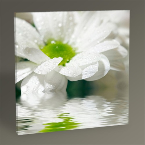 Tablo 360 White Daisy Tablo 30X30