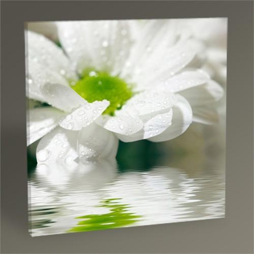 Tablo 360 White Daisy Tablo 30X30
