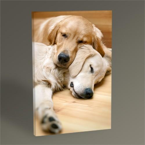 Tablo 360 Uyuyan Köpekler Tablo 45X30