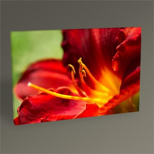 Tablo 360 Zambak Çiçeği Tablo 45X30