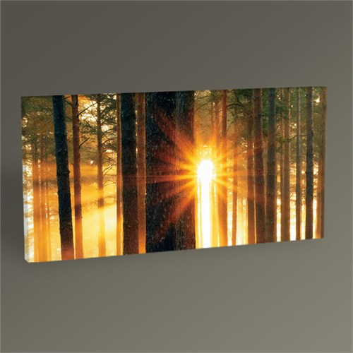 Tablo 360 Forest Sunbeams Iı Tablo 60X30