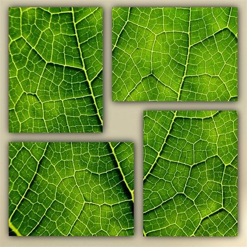 Tictac 4 Parça Kanvas Tablo - Yeşil Yaprak