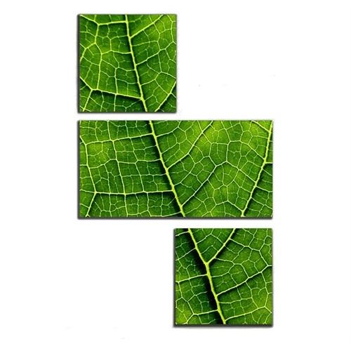 Tictac 3 Parça Kanvas Tablo - Yeşil Yaprak