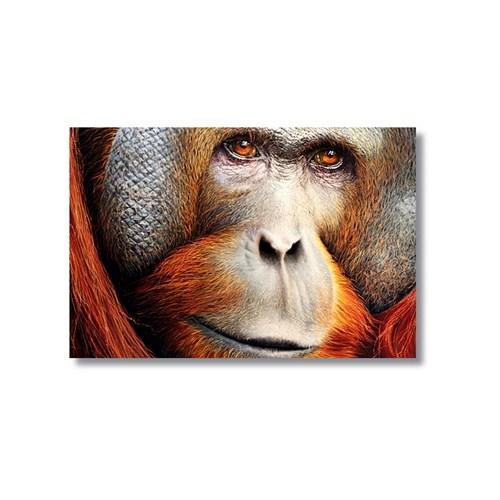 Tictac Maymun Kanvas Tablo - 50X75 Cm