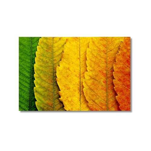 Tictac Sararan Yapraklar Kanvas Tablo - 60X90 Cm