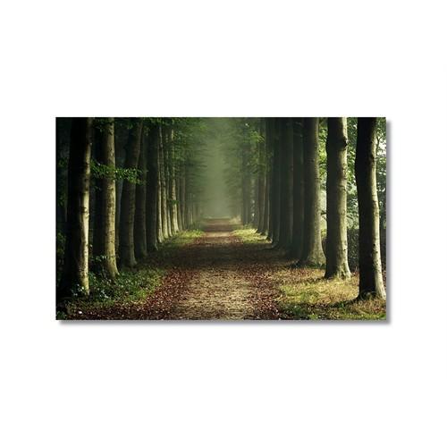 Tictac Ağaçlı Yollar Kanvas Tablo - 60X90 Cm