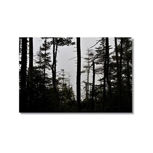 Tictac Ağaçlar Kanvas Tablo - 50X75 Cm