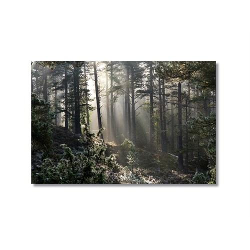 Tictac Ormandaki Işık Kanvas Tablo - 40X60 Cm