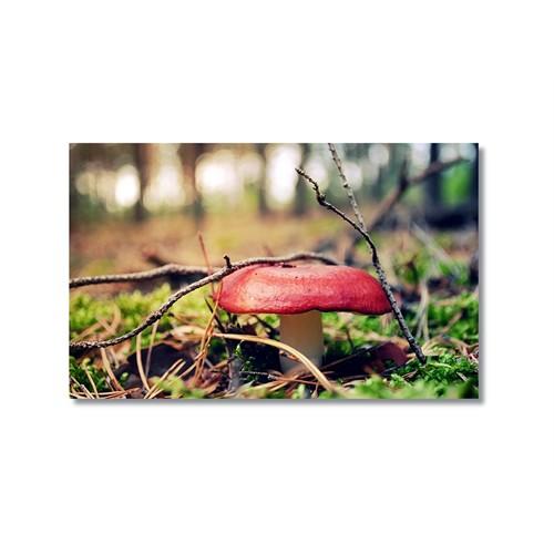 Tictac Kırmızı Mantar Kanvas Tablo - 40X60 Cm