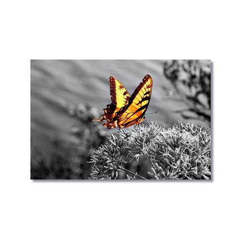 Tictac Sarı Kelebek 4 Kanvas Tablo - 60X90 Cm