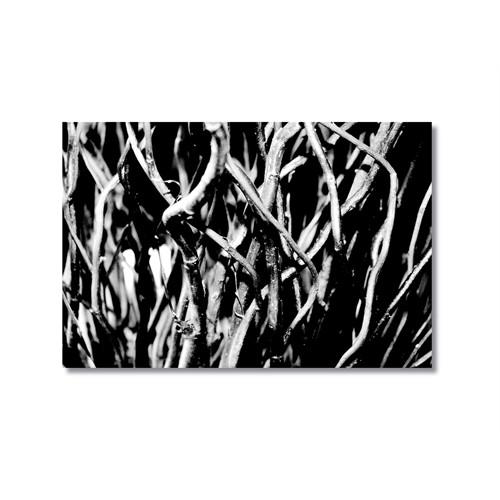 Tictac Siyah Beyaz Dallar Kanvas Tablo - 50X75 Cm