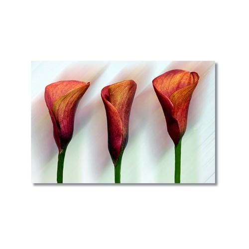 Tictac Kırmızı Çiçekler 2 Kanvas Tablo - 50X75 Cm