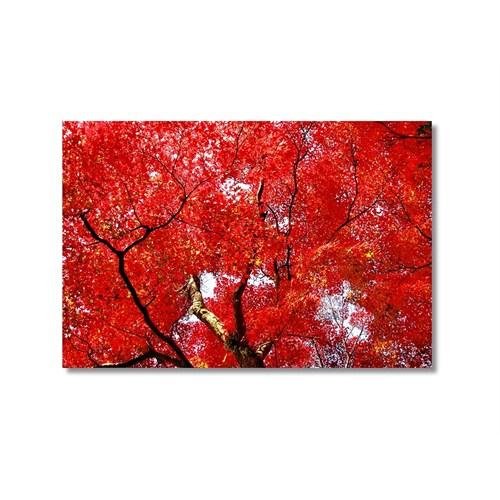 Tictac Kırmızı Yapraklar 2 Kanvas Tablo - 50X75 Cm