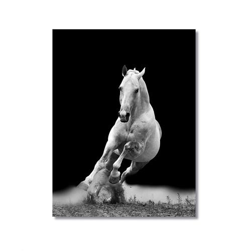 Tictac Koşan Beyaz At Kanvas Tablo - 50X75 Cm