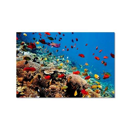 Tictac Renkli Balıklar Kanvas Tablo - 50X75 Cm