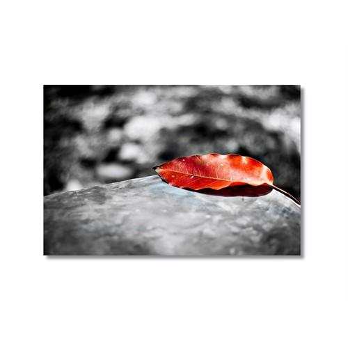 Tictac Kırmızı Yaprak Kanvas Tablo - 50X75 Cm