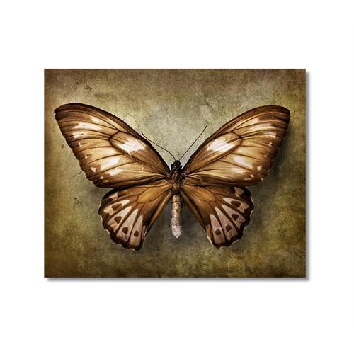 Tictac Kahverengi Kelebek Kanvas Tablo - 70X70 Cm