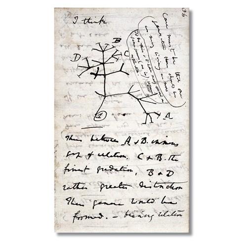 Tictac Evrim Ağacı Kanvas Tablo - 50X100 Cm