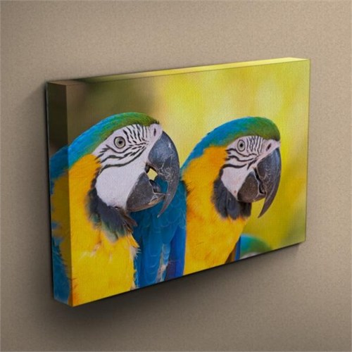Canvastablom T289 Papağanlar Kanvas Tablo