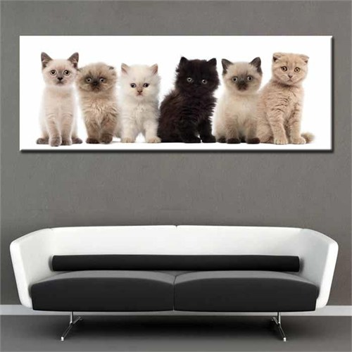 Canvastablom Pnr25 Şirin Kediler Panaromik Tablo