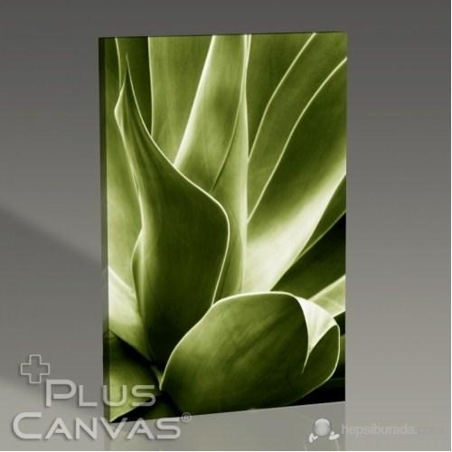 Pluscanvas - Flora Iv Tablo