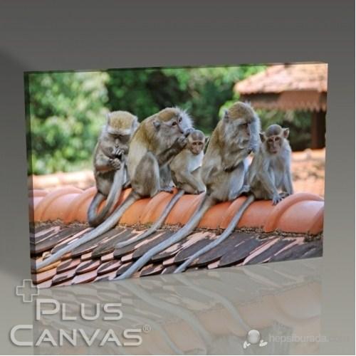 Pluscanvas - Oktay Toygar - Monkey Family - Morning Cleaning Tablo