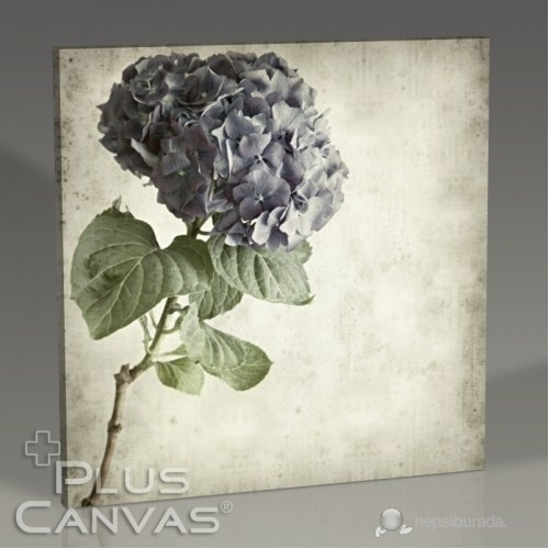 Pluscanvas - Blue Hydrangea Tablo