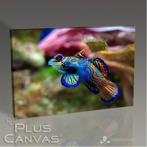 Pluscanvas - Synchiropus Splendidus Tablo