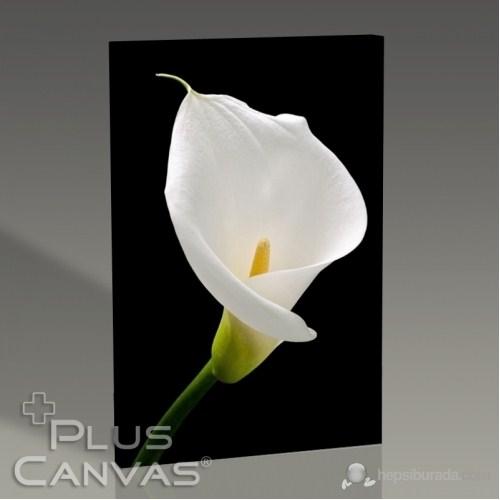 Pluscanvas - White Lillies Tablo
